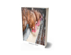 Poultry feeds and feeding made easy